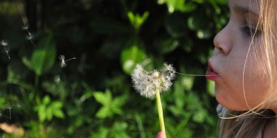 A close up of a young girl blowing dandelion clocks